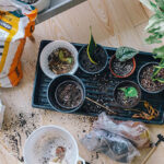 7 essential gardening tips for beginners