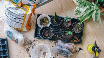 small plants in flowerpots